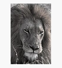 Lion Man - Photographic Nature Print Photographic Print