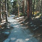 Sunlit Path In Colorado  by Eoxe