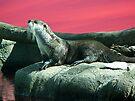 Otter by Veronica Schultz
