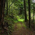 Mossy Trail by Krackle