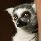 Ring tailed Lemur by Foxfire