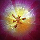 ~soul of a tulip~ by Terri~Lynn Bealle