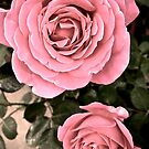Antique Pink by justminting
