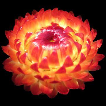 zauberhafte Blüte, Blume, Sommer, Sonne, orange, rot, gelb von rhnaturestyles