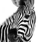 Zebra painting by Danguole Serstinskaja
