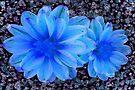 Wall Flower by Terri Chandler