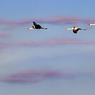Wattled Flying Lesson by Owed To Nature
