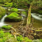 Streams of the Smoky Mountains by Kay Brewer