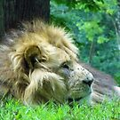 King by brucemlong