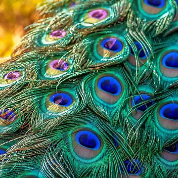 peacock by The-Engineer
