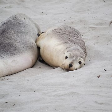 Seals by MiMoCreative