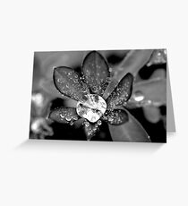 Lupin Diamond Greeting Card