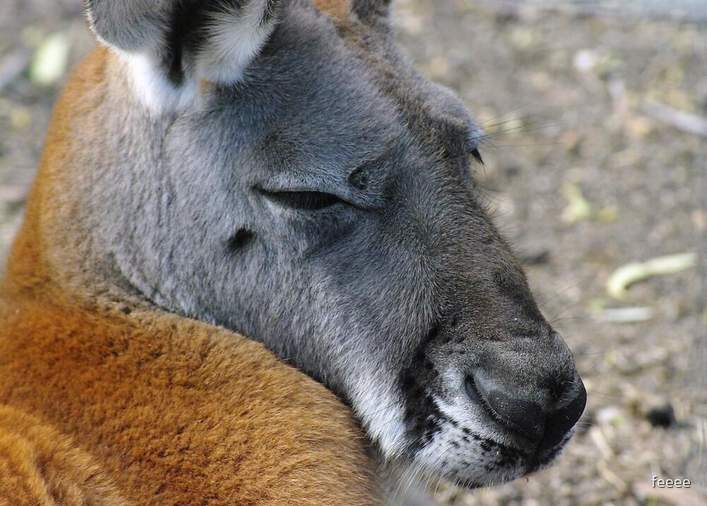 Big Red Kangaroo by feeee