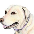 Labrador Dog Watercolour Illustration by Shannon Kennedy