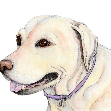 Labrador Dog Watercolour Illustration by shanmclean