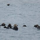 Raft of Sea Otters by caybeach