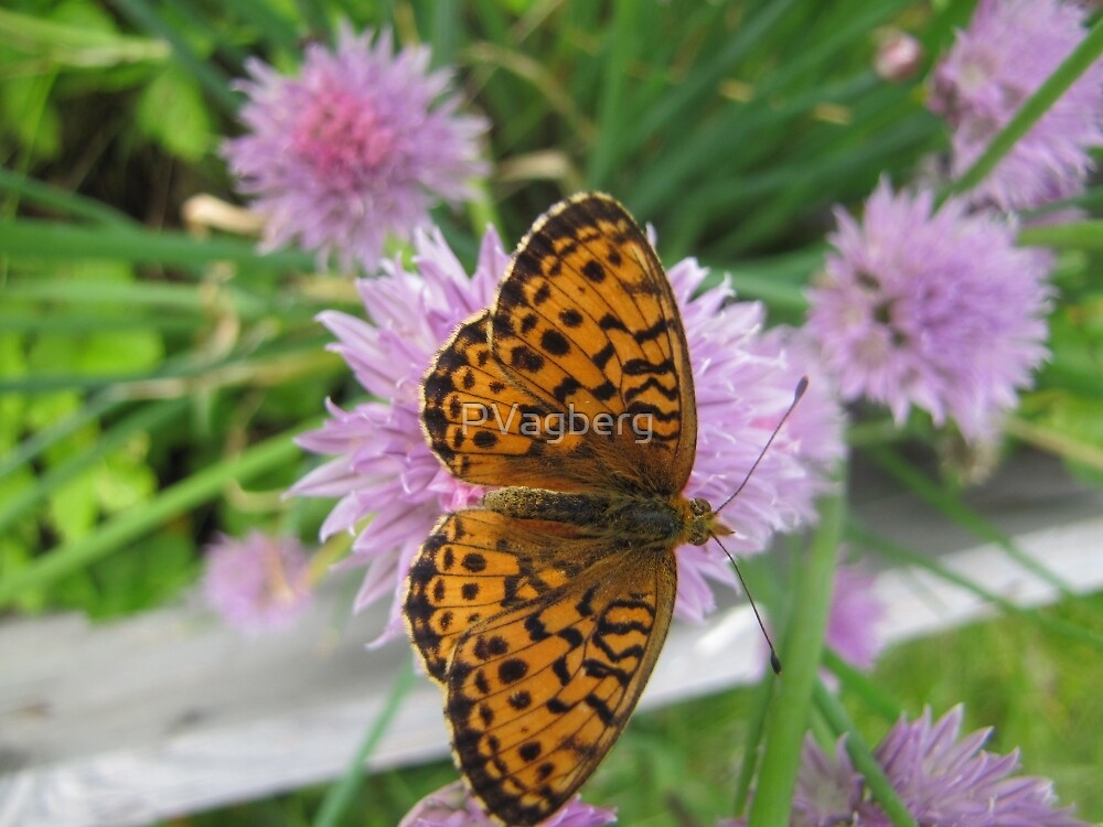 Butterfly on chive flower by PVagberg