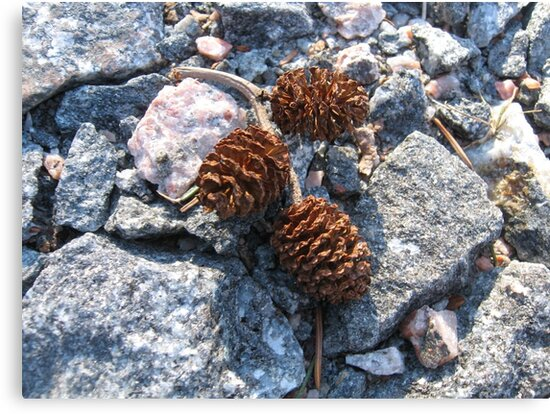 Cones on rocky surface by PVagberg