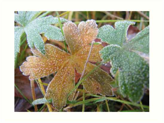 three leaf togeher by PVagberg