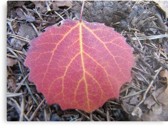 red leaf by PVagberg