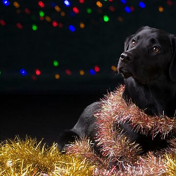 Christmas Dog by Kathryn-Thomas