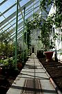 The Vinery by CiaoBella