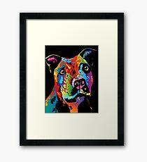 Staffordshire Bull Terrier Framed Print