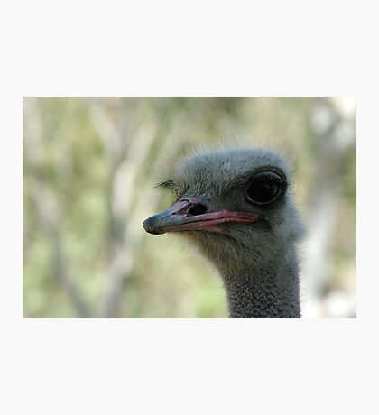 Ostrich Photographic Print