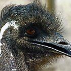 Emu by feeee