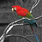 ...the Parrot and selective colours ... by John44