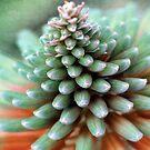 Desert Flower II by Amanda White