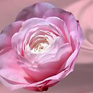 Pink Flower on Pink Satin by TJ Baccari Photography