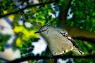 Little bird by LudaNayvelt
