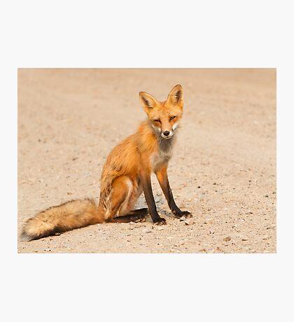 Desert fox Photographic Print