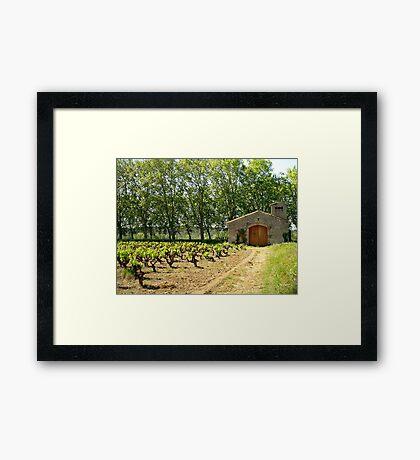 Vineyard at Argen Minervois Framed Print
