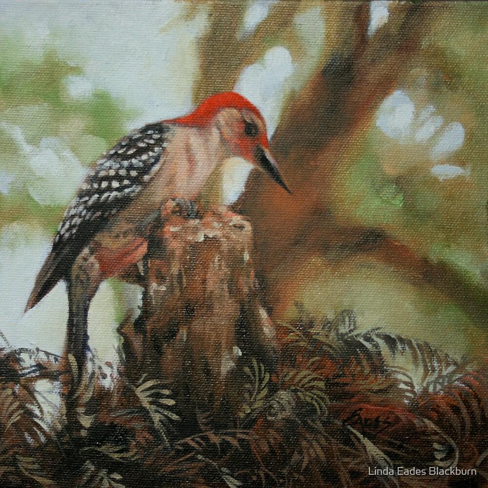 Red Bellied Woodpecker by Linda Eades Blackburn