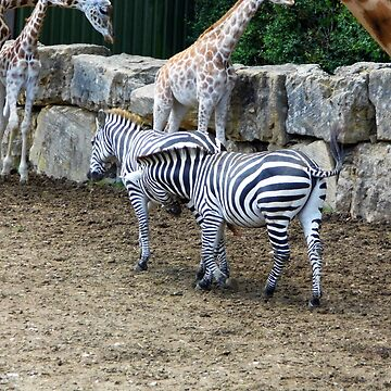 Zebras by brucemlong