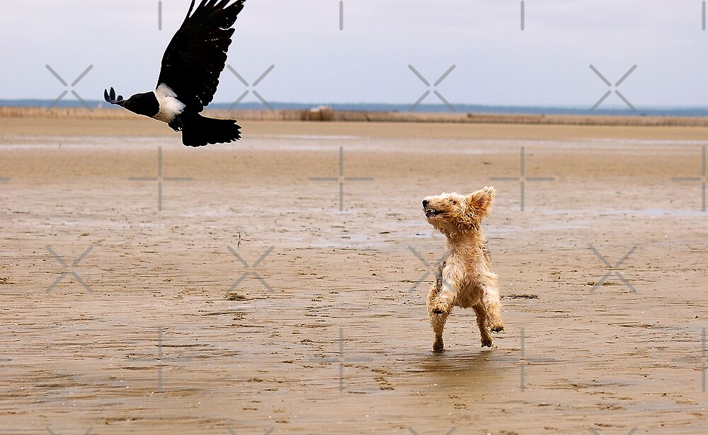 """NO 2 -  """"SPIKKELS"""" AND THE CROW.... 10.41.45 HRS by Magriet Meintjes"""
