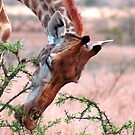 A DELICATE TOUCH ! by Magriet Meintjes