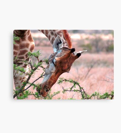 A DELICATE TOUCH ! Canvas Print