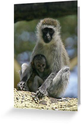 Vervet monkey & baby by David Clarke