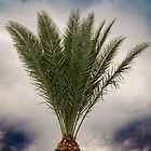 Pineapple Palm by gemlenz