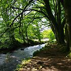 River Fowey At Golitha by lezvee