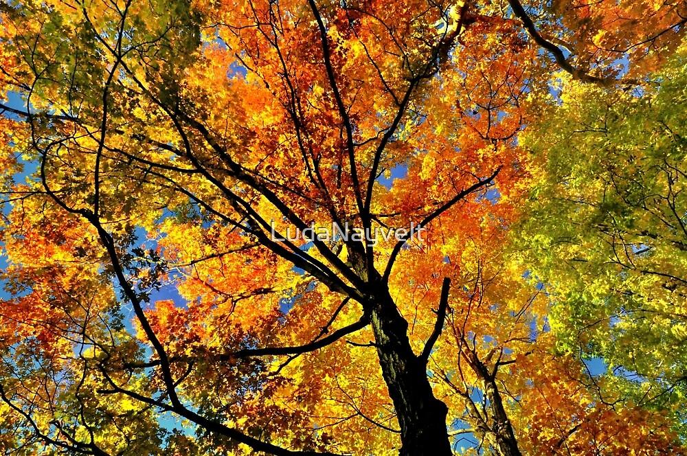 Fall Gamma  by LudaNayvelt