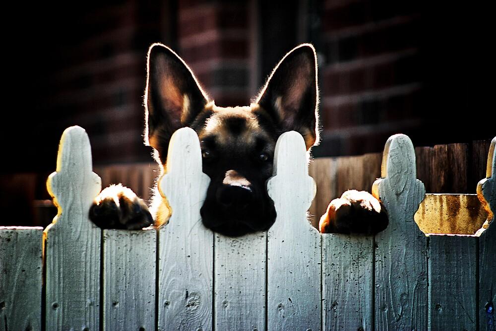 Neighbourhood watch by MattyWerts