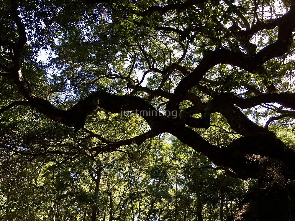 Twisted Angel Oak by justminting