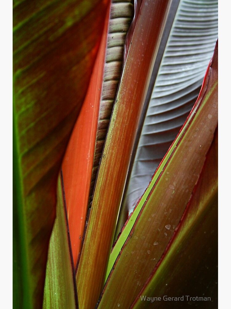 Banana Tree Detail by redmoondragon