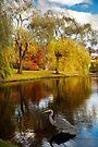 Larz Anderson park guest  by LudaNayvelt