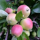 Apples by agnessa38