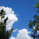 Blue Skies by inglesina